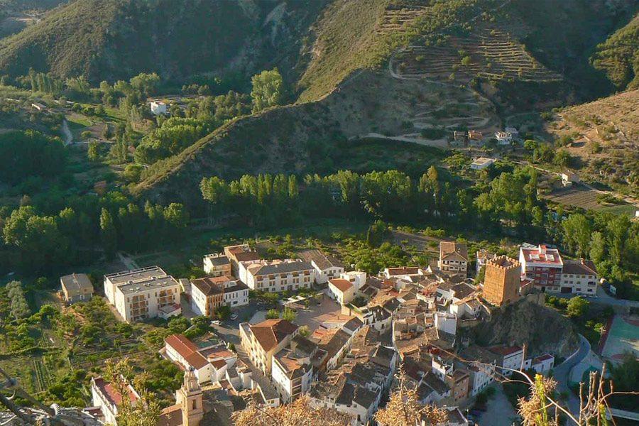 Bosques y plantas autóctonas de la Comunidad Valenciana: la flora de Sot de Chera